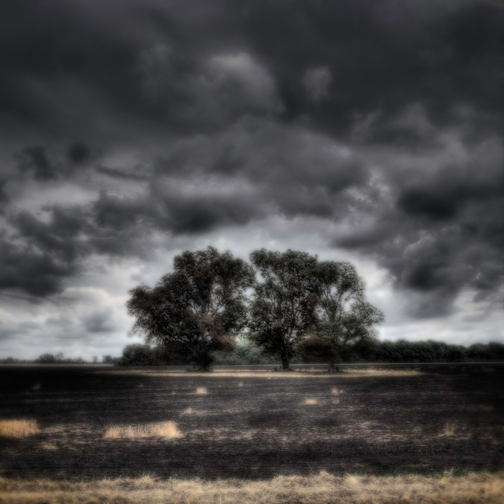 Delta_ Trees in Black Field WEB.jpg