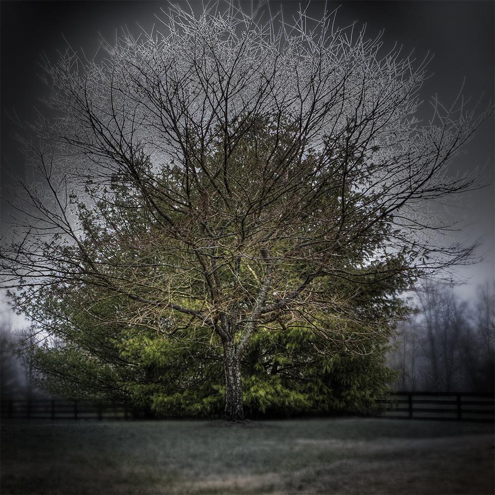 Tree Guarding.jpg