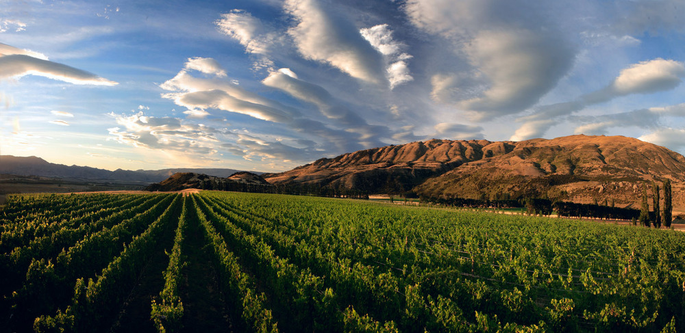 Archangel | Queensbury | Central Otago