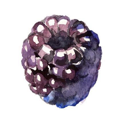 blackberryicon.jpg