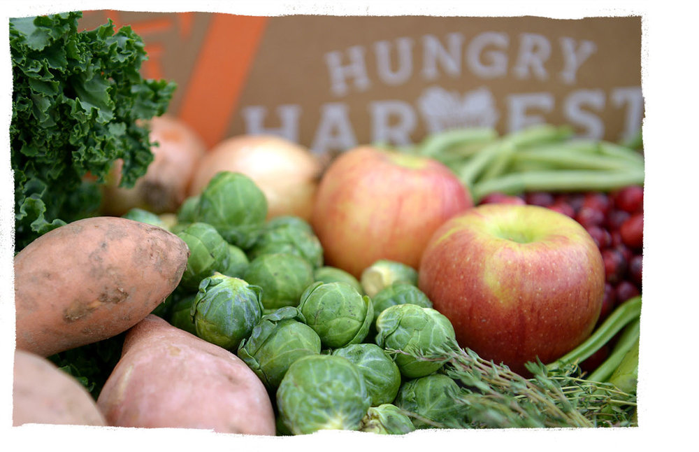 Our Weekly Produce Deliveries - Each week, we curate fresh rescued fruits & veggies, pack 'em up & deliver to your doorstep for less than grocery store prices. Our customizable boxes come in a variety of sizes & options so you can find the harvest that's just right for you!A Typical Full Harvest Contains:1 head Lettuce / 3 Yellow Squash / 1 head Cauliflower / 2 Cucumbers / 6 Peaches / 3 Mangoes / 2 lbs French Red Fingerling Potatoes / 6 Plums / 2 Celery Hearts