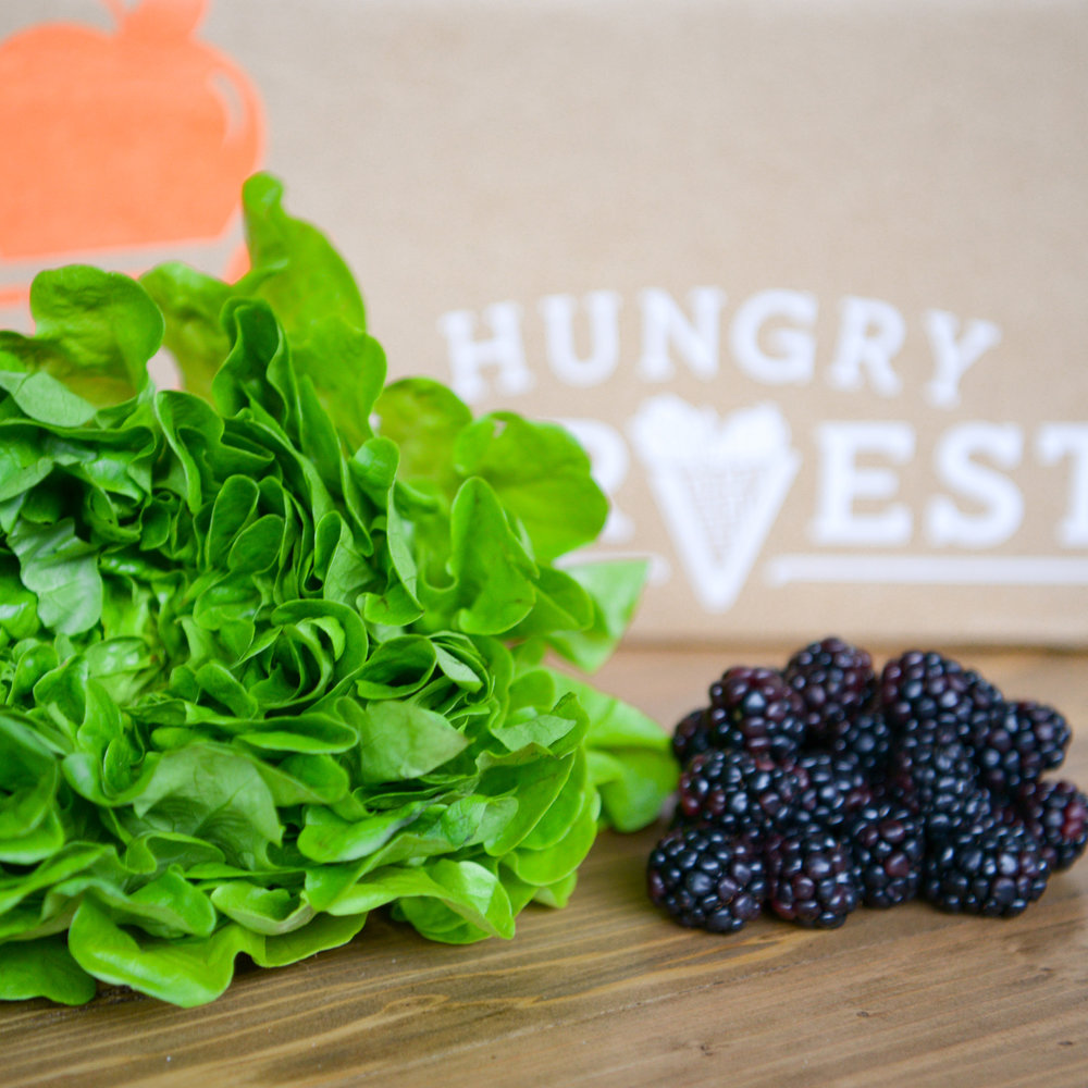 Blackberry & Greens SaladAn unassuming, simple salad that tastes as good as it looks. - Find the recipe at: Simply Sated