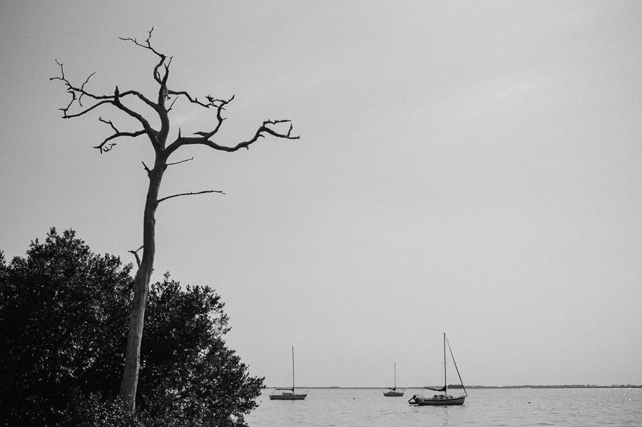 black and white, tree, boat, gulf, florida