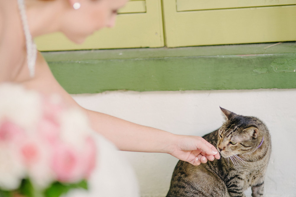 hemingway house wedding key west florida cat