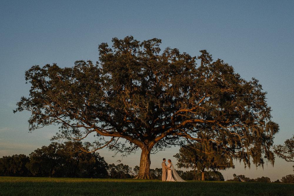 Florida Countryside Wedding Giant Oak Tree