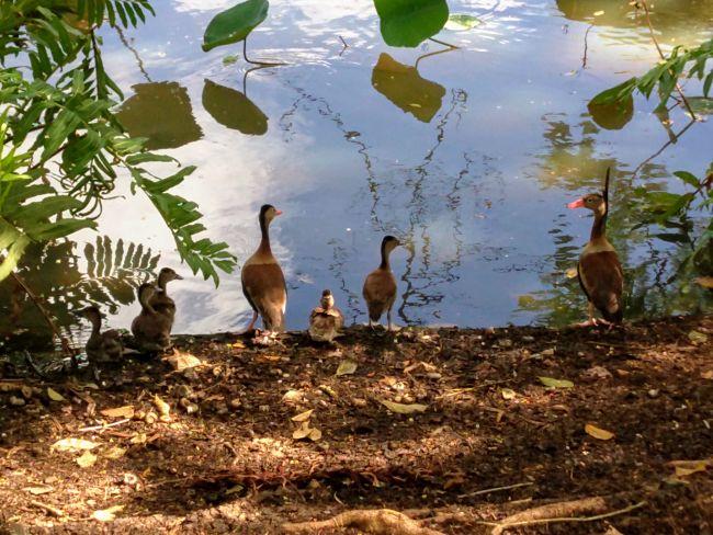 trinidad food tours - Layover wild fowl tour, trinidad