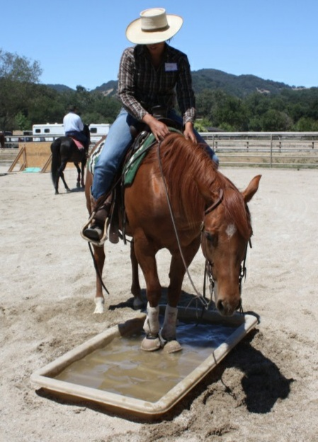 Does your horse willingly go into water? Are you sure? The water box can be a very challenging obstacle!