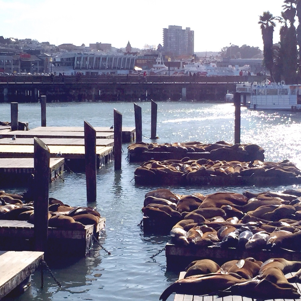 Sea Lions, the story of how they became pier 39 residents it's pretty neat.