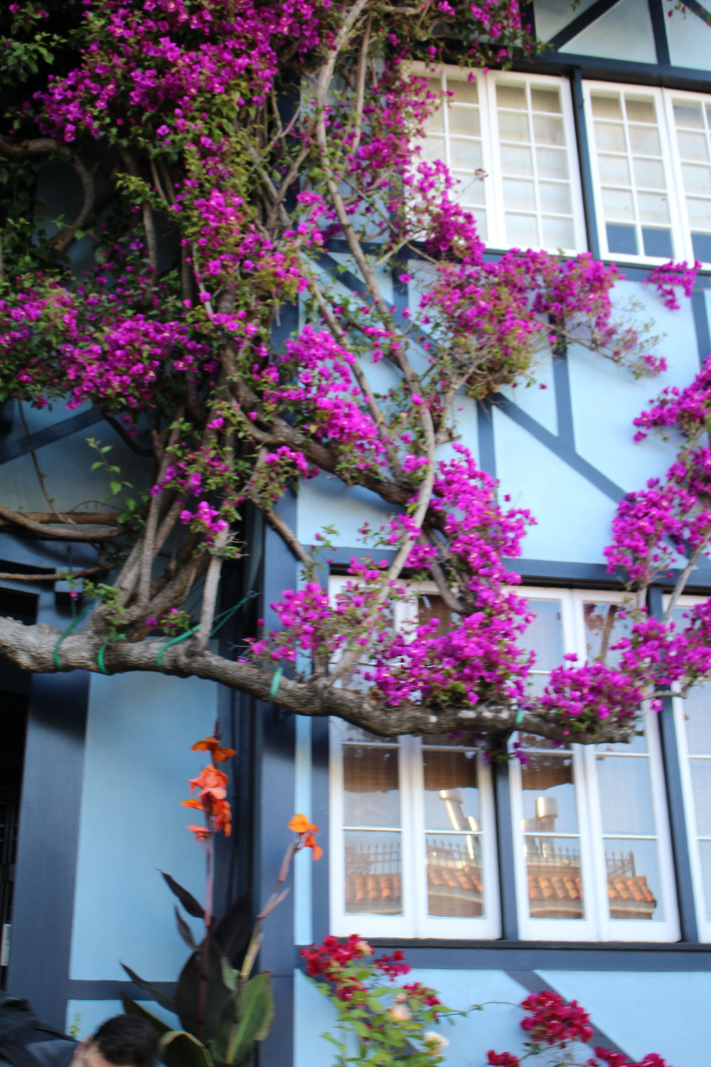 One of the houses at Lombard street. Pretty flowers!