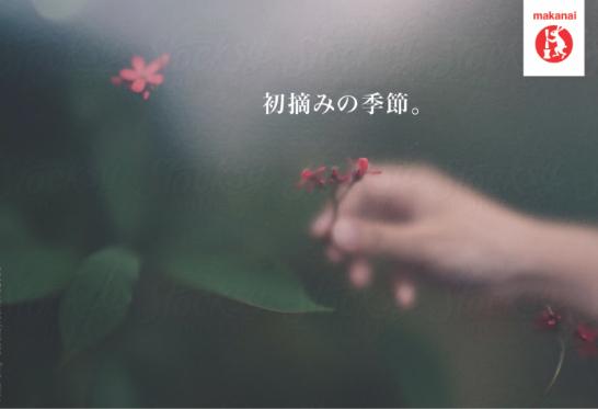 Image 52.jpg