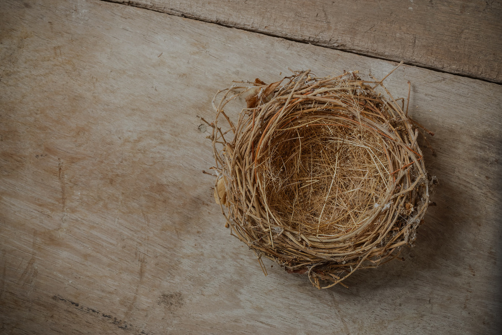 bigstock-Bird-Nest-70874089 copy.jpg