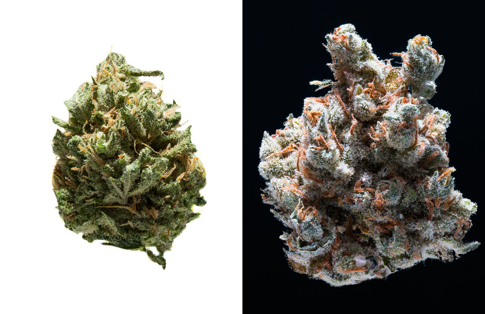 cannabis_promo_v2-56.jpg