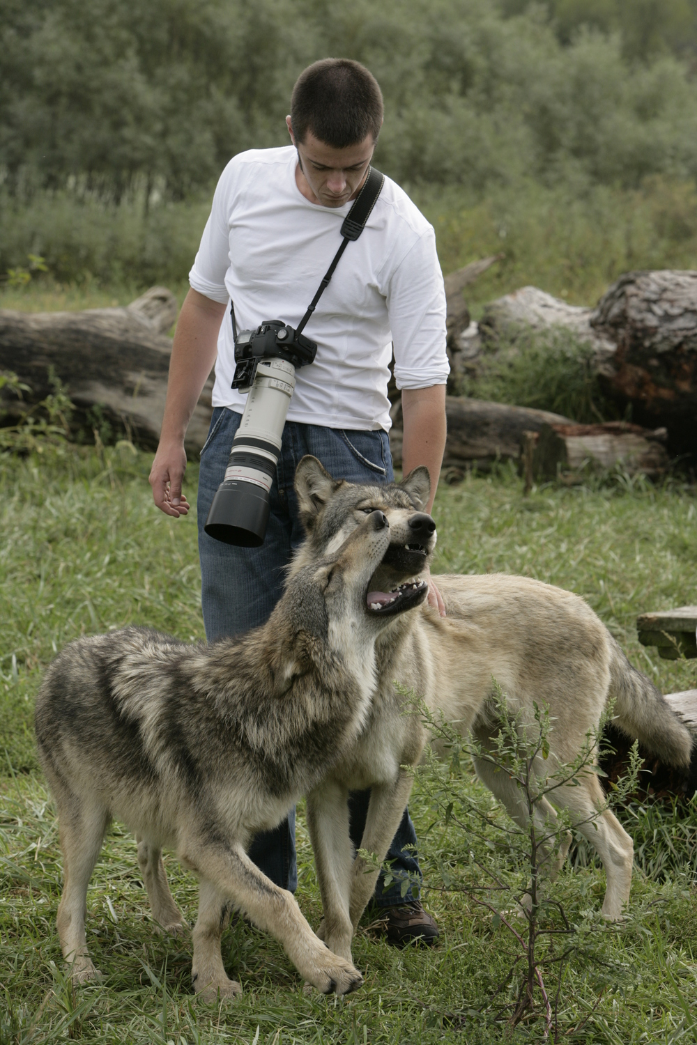Me, aged 20, with grey wolves in the USA (c) M Sloan