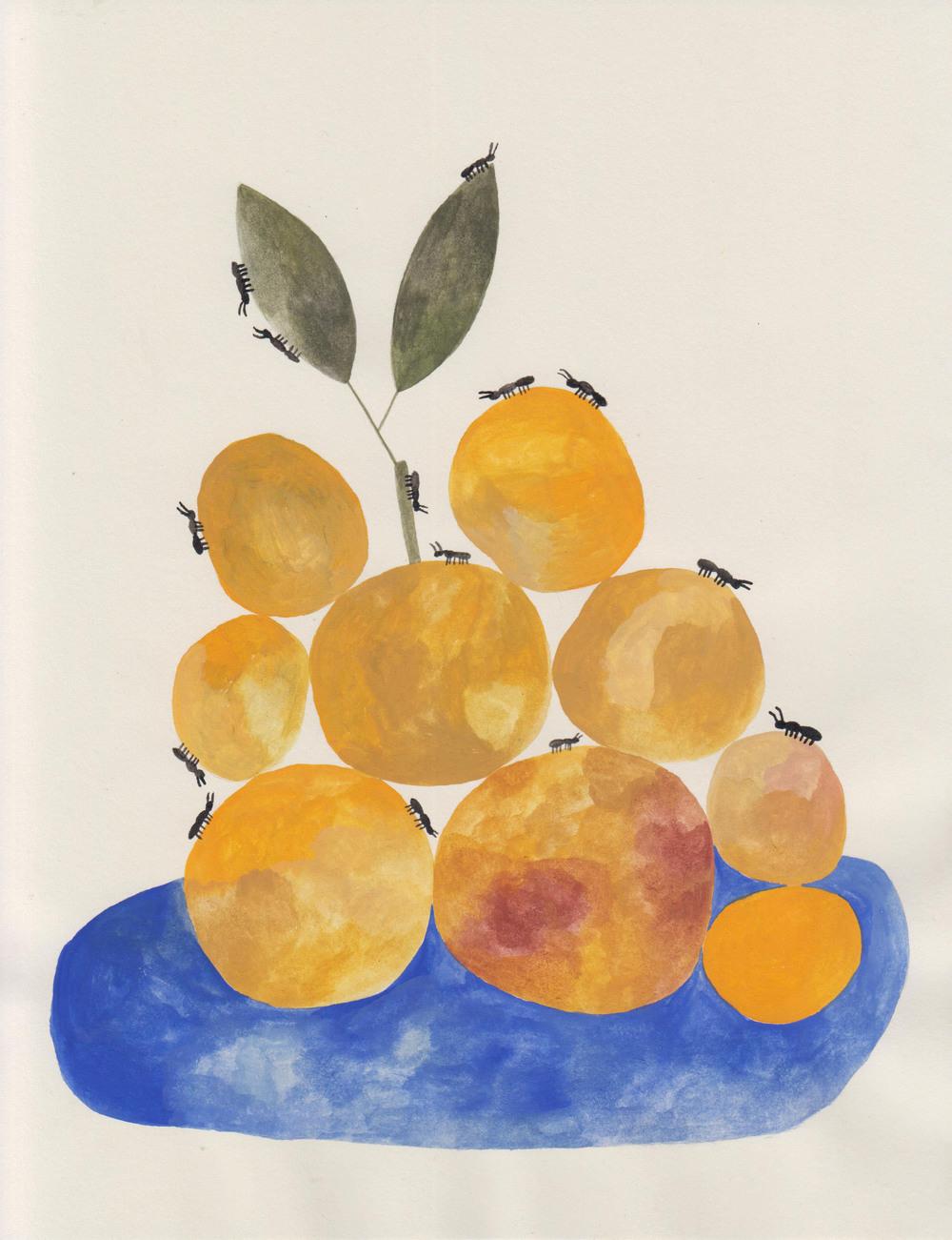 OrangesandAnts_AHW.jpg