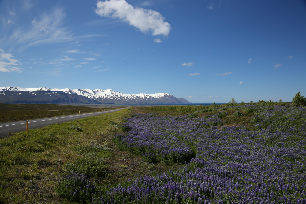 1306_Islande_3098.JPG