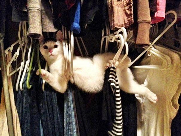 cat-hangers