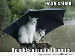 cat-umbrella-meme