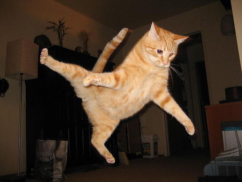 jumping-cat-meme-2