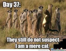 mere-cat-meme