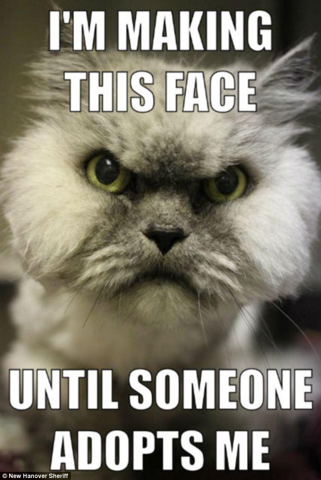 adopt-a-cat-meme