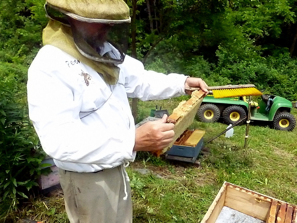 The Beekeeper doesn't let Wilfred eat the bees. He needs them to make honey.