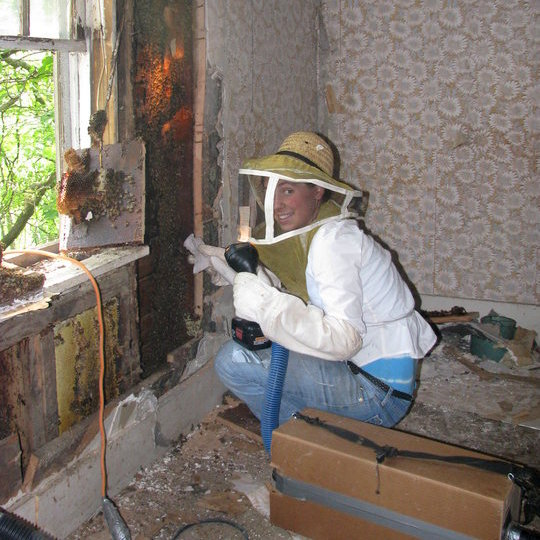 This is me, vacuuming bees out of a wall in a house that is scheduled for deomolition.
