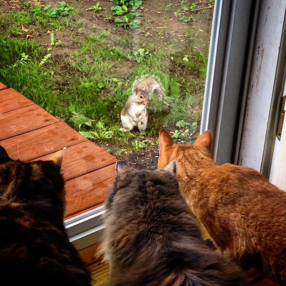 The whole team brainstorms how to solve the squirrel problem.