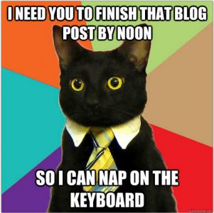 business-cat-blog-meme