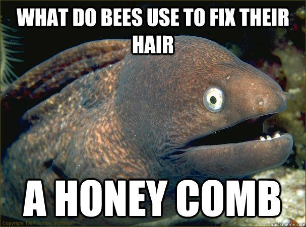honey-bee-comb-fish-meme