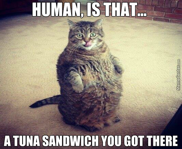 fat-cat-meme-tuna-sandwich