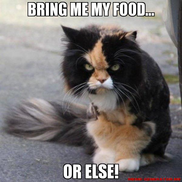 cat-meme-food-calico-bring-me-my-food
