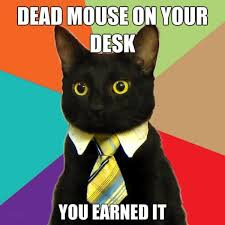 business-cat-dead-mouse