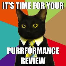 business-cat-performance-review