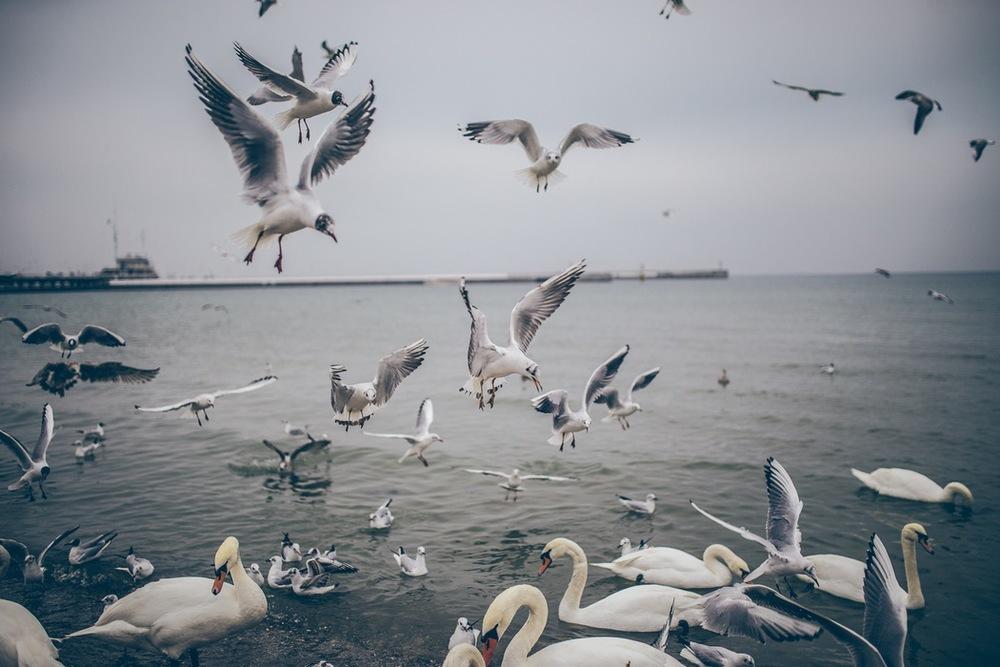 birds-flying