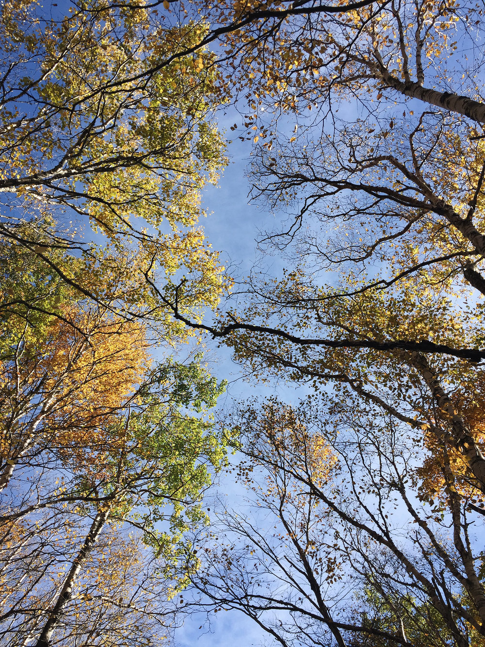 AT ONE POINT WE WERE SURROUNDED BY BEAUTIFUL HUES OF YELLOW AND GREEN. I LOOKED UP AND LOVED WHAT I SAW.