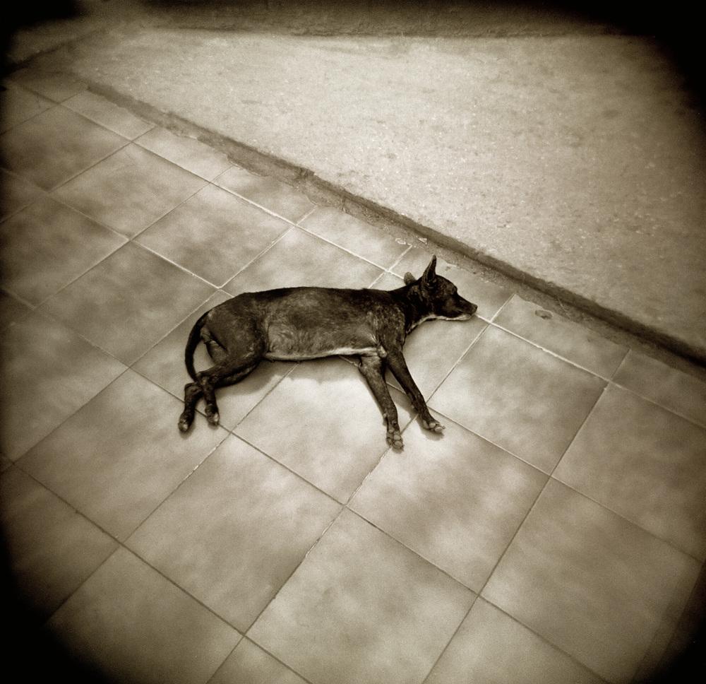 09_Cuba Dog_small.jpg