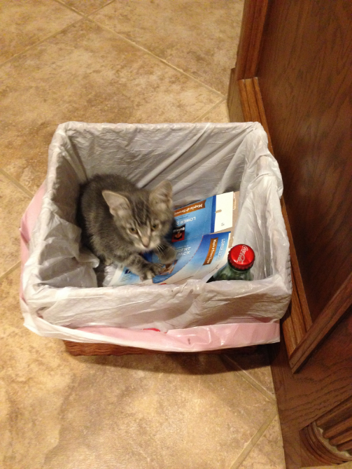 Tabby in the recycling basket. (Photo by Jaz Primo, Sept. 2014)