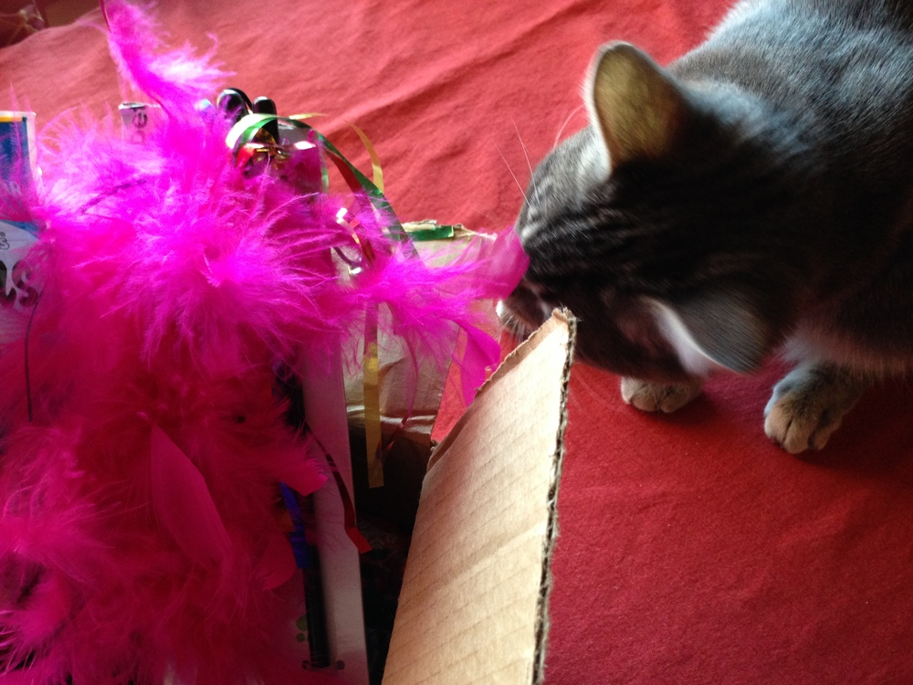 Tabby Evaluates the Gifts -- (PHOTO COPYRIGHT 2014 BY JAZ PRIMO)