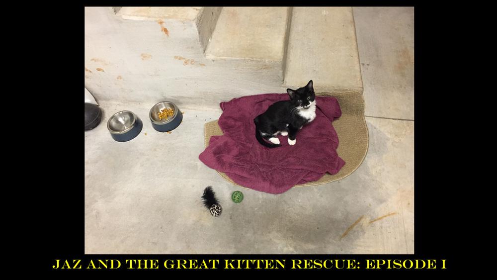 Stray Kitten 03