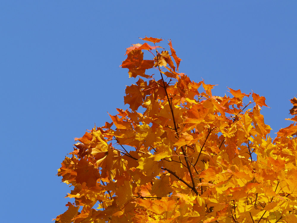 [Fall Leaves -- LEGAL USE OF THIS PHOTO LICENSED AND SECURED VIA DREAMSTIME - July 2014]