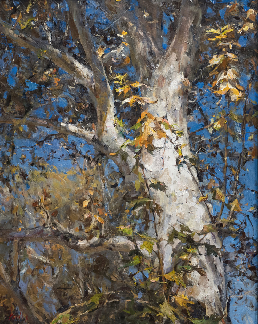 Derek Penix_American Sycamore_2018_oil on TBD_24 x 30 in._$8,500.jpg