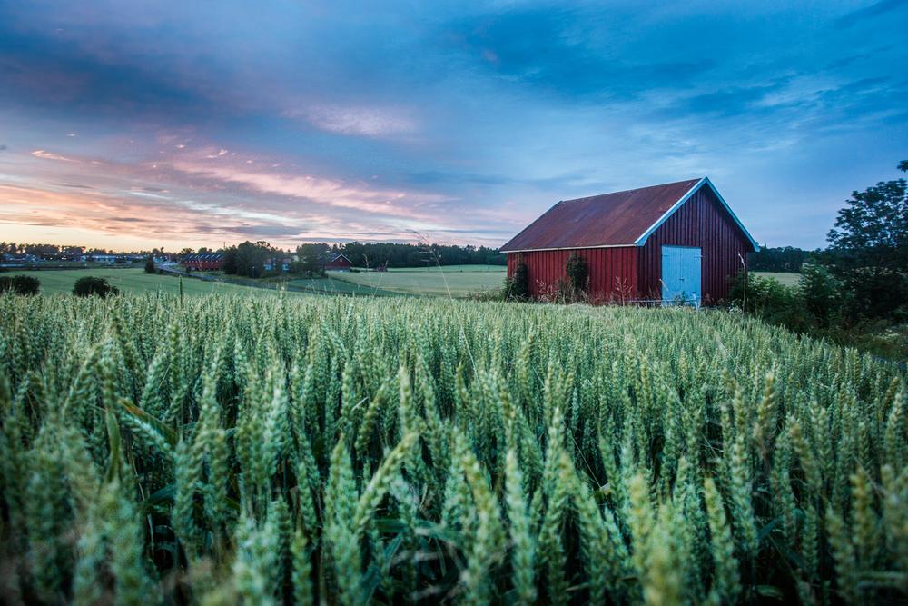 220715_fausko_hvaler_dykking_landskap_sunset-4.jpg