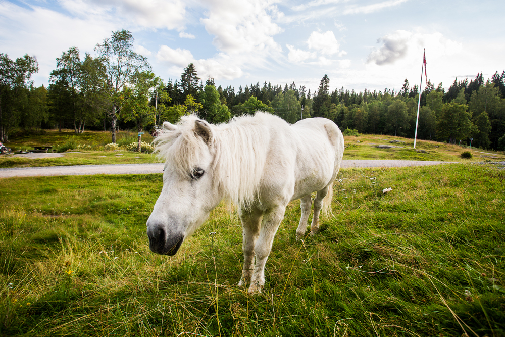 160815_fausko_sykkeltur_ullevålseter_hest.jpg