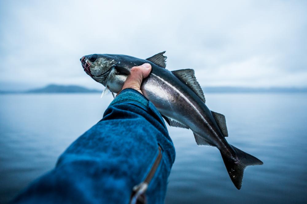 130516_fausko_lofotentravels_fjord_sæbu_alesund_landskap_dokumentar-4.jpg
