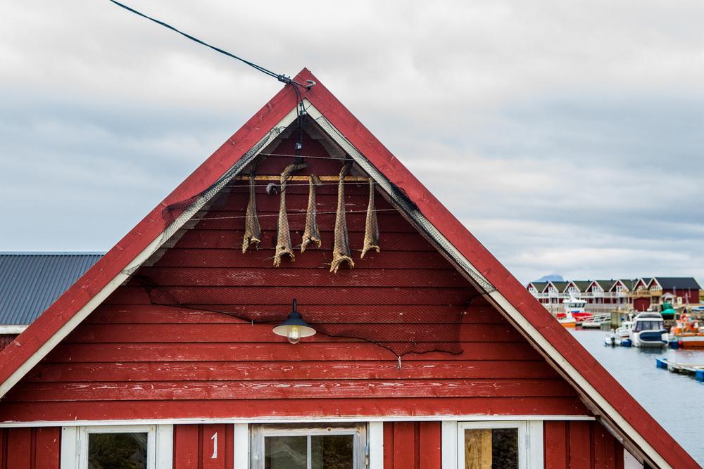 210516_fausko_lofotentravels_bolga_svartisen_landskap.jpg