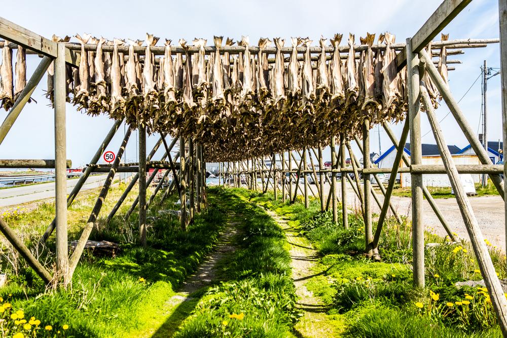 280516_fausko_lofotentravels_lofoten_røst_landskap_dokumentar-7.jpg