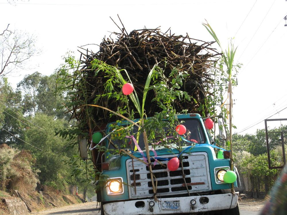 sugar cane.jpg
