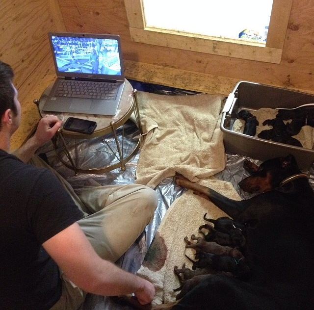 Hubby watches a movie in the whelping box while Lex relaxes with her just newborn puppies.