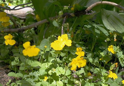 flowers-2-512.jpg