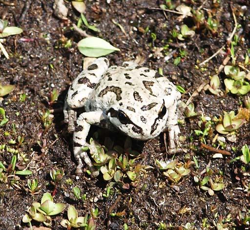 Frog-1-512.jpg